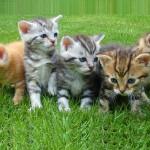 Foto de cinco gatinhos